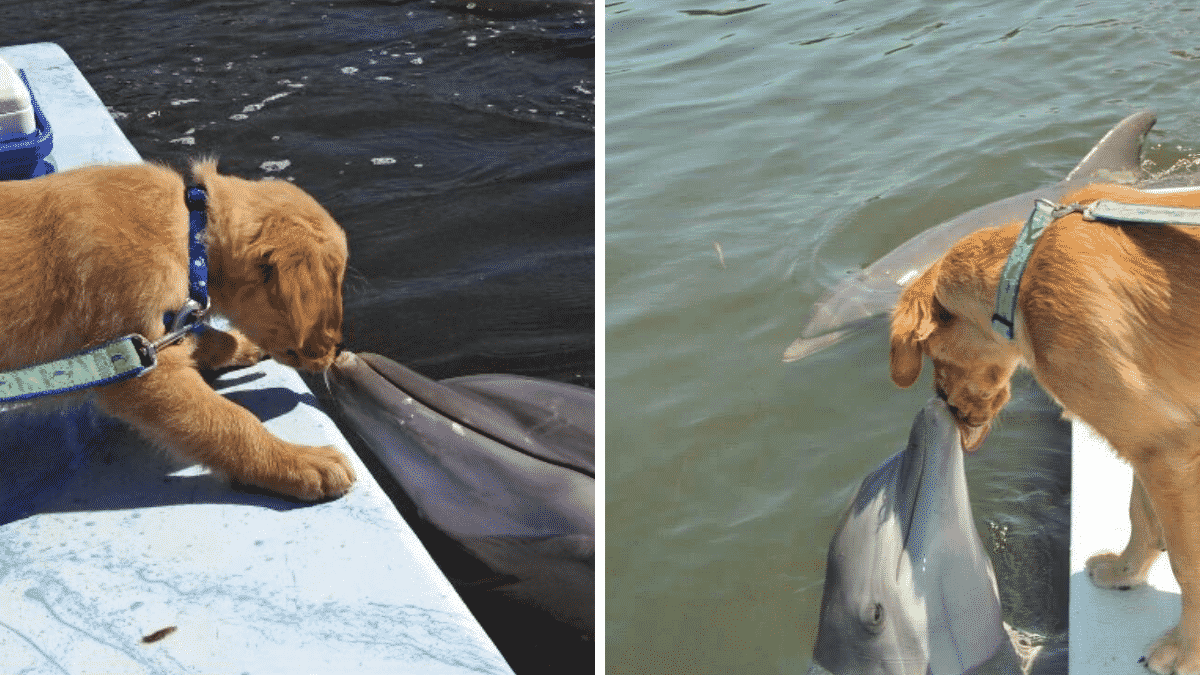 A Lifelong Friendship Between Dog and Dolphin is Melting Everyone's Hearts |