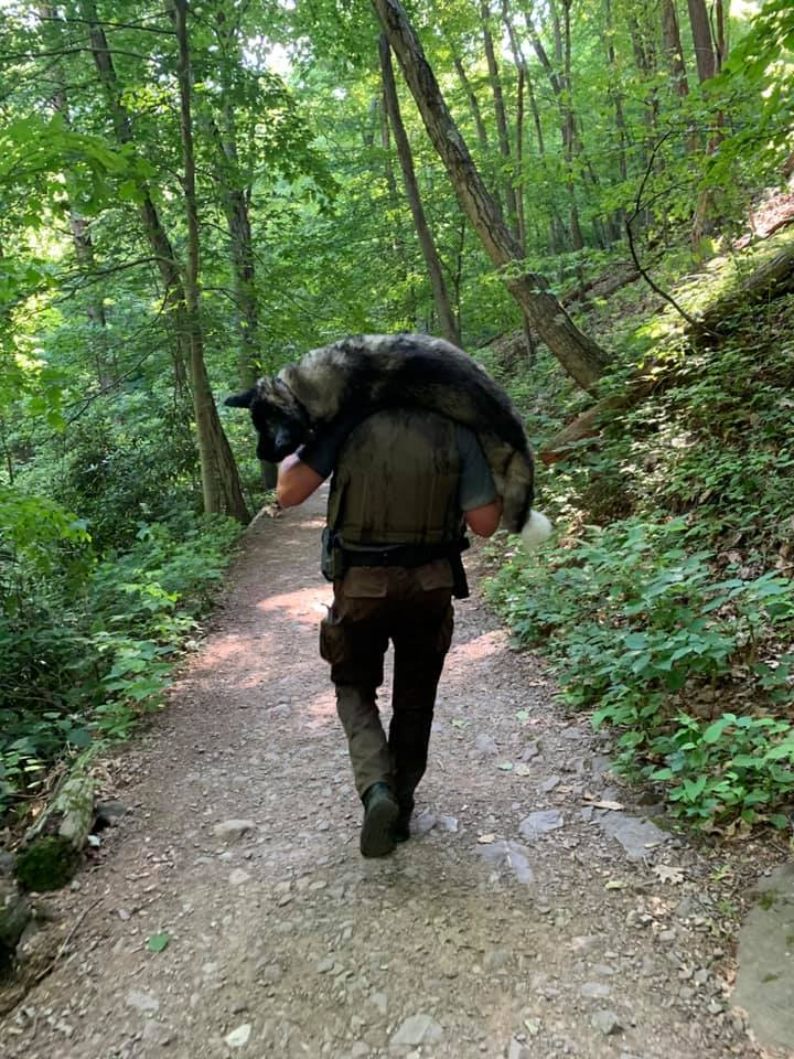 Ranger Carries 100lb German Shepherd For Miles Through Rocky Hills to Save His Life |