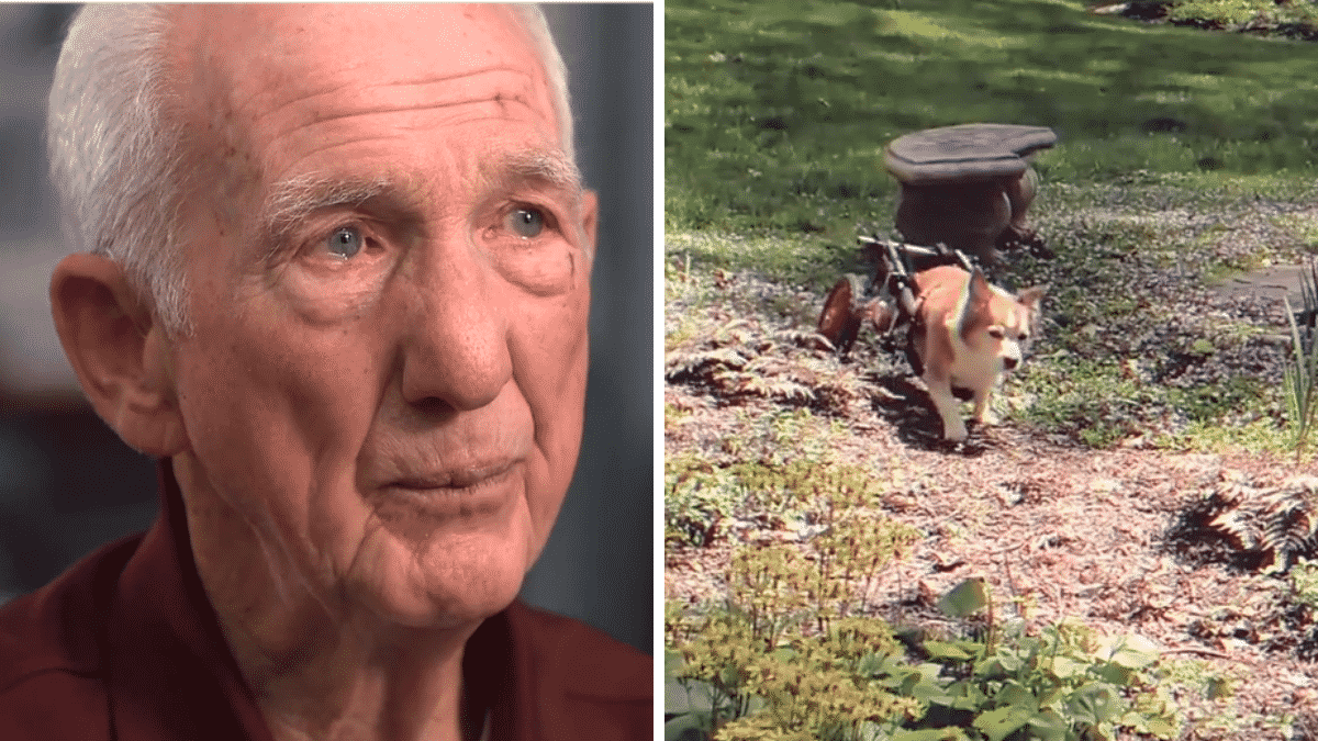 92-year-old Retired Vet Makes 'Wheelchairs' For Disabled Dogs |