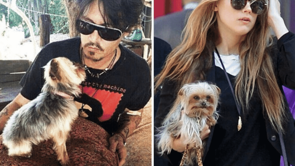 Johnny Depp 'Dangled Amber Heard's Yorkie Out Of Car Window & Howled'