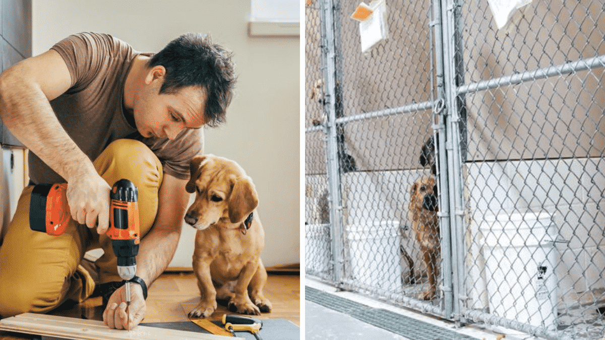 Man's Wife Told Him the Dog Ran Away, He Discovered She Dumped Him in a Kennel |