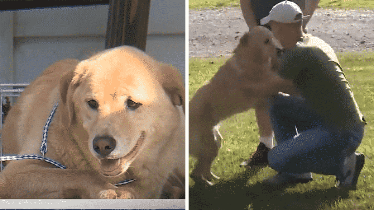Family Finds Strange Dog on Their Porch, Are Amazed to Discover Why He Made a 60-Mile Journey To Their Home |