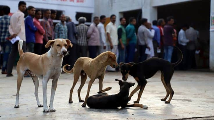 India Takes Serious Steps To Kill the Dog Meat Trade