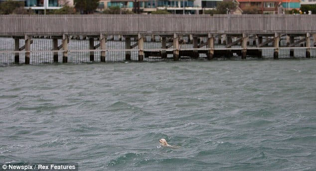 Man Goes to Scatter Grandma's Ashes in Bay, Finds Dog Drowning and Jumps In To Save His Life |