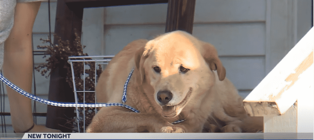 Family Finds Strange Dog on Their Porch, Are Amazed to Discover Why
