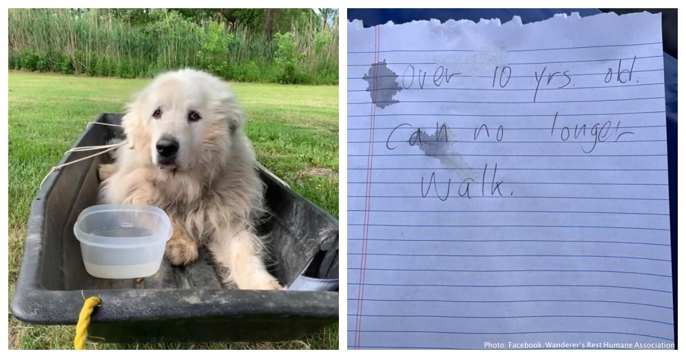 Senior Dog Abandoned Outside Animal Shelter With Just a 7-Words Note |