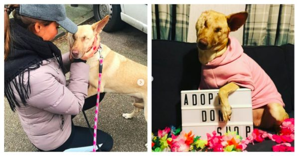 Woman Flies Abused Dog 2,500 Miles To Show Her Love For The First Time in Her Life |