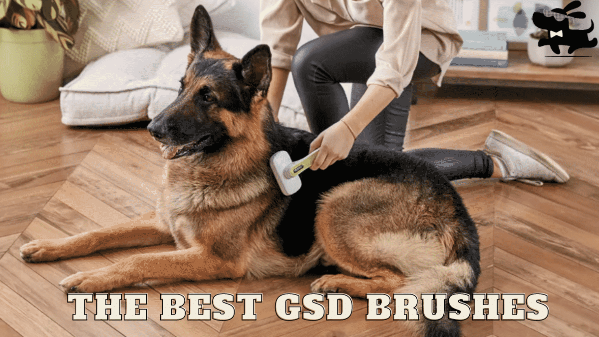 The Best Brush For German Shepherd - A 2020 Buyer's Guide of The 5 Best Brushes |