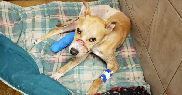 Community Bands To Save Dog Abandoned To Die With Mouth Shut |