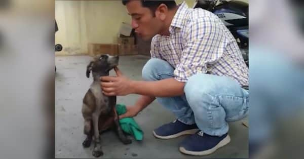 Dog Found Covered in Tar, Trash, and Dumped on The Side of The Road |
