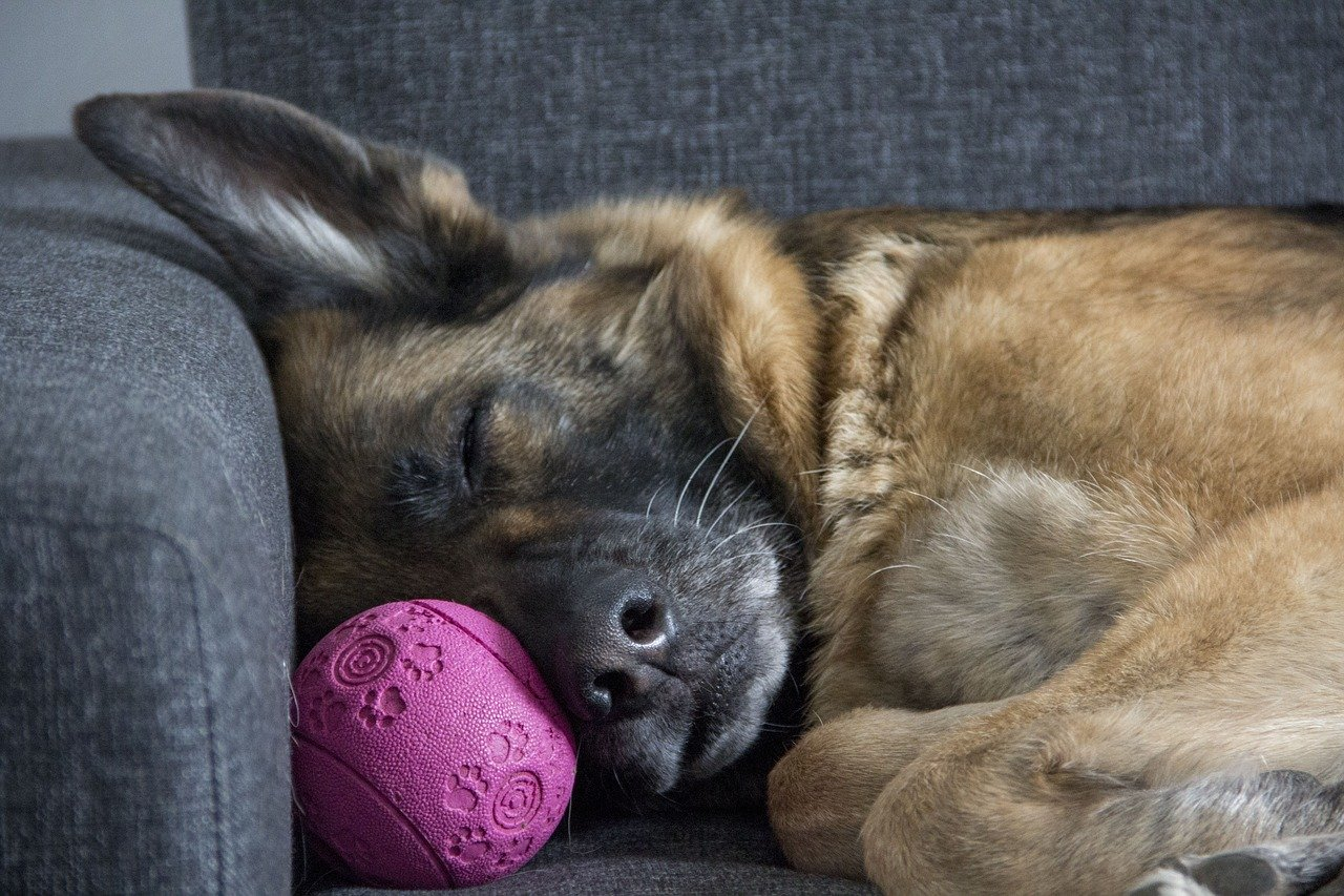 Don't Make These Silly Dog-Owner Mistakes if You Really Love Your Dog |