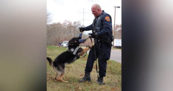 """K-9 German Shepherd is """"Employee of The Summer"""" After He Found Missing Elderly Woman in Less Than 10 Minutes 