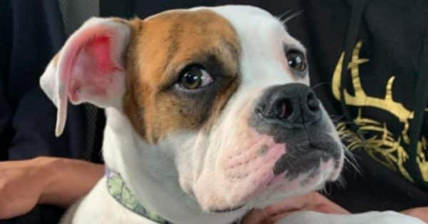 Man Brutally Beats Puppy Causing Paralysis and Several Fractures – Only Charged With Misdemeanors |