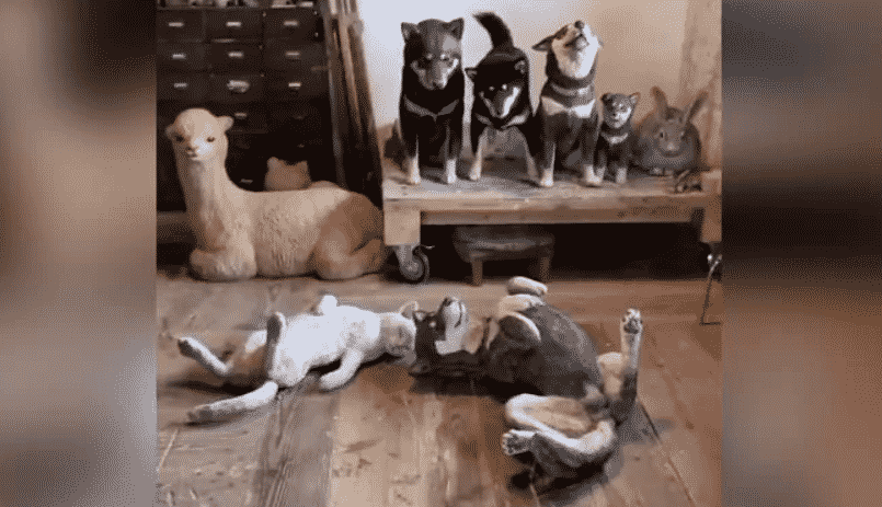 No One Can Spot The Real Dog Among These Life-Size Wooden Replicas, Can You? |