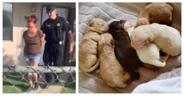 Cruel Woman Arrested After Dumping Seven Newborn Puppies In Sealed Trash Bag |