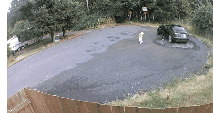 Woman Caught on Cam Abandoning Her Dog By Walking Him Then Running Back To Her Car |