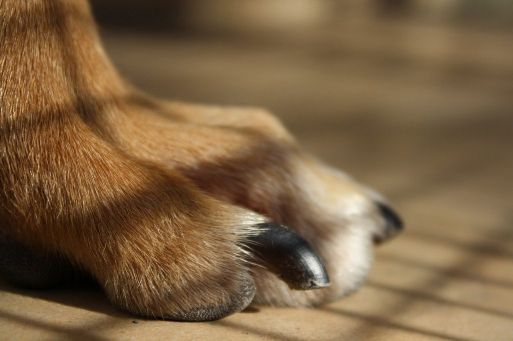 How to Trim Dog Nails That Are Overgrown in 8 Simple Steps |
