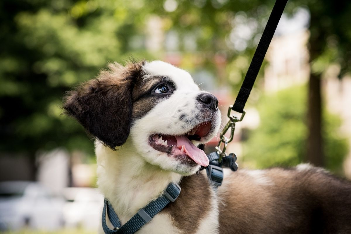 Three Tips for Mastering Your Dog Walk  