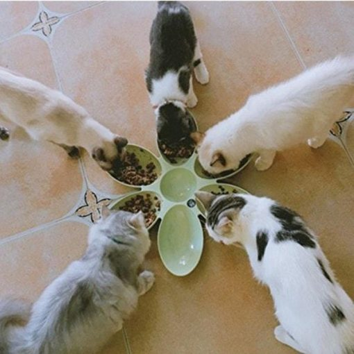 6 Connected Bowls for Pet Connected Bowls for Pet GlamorousDogs