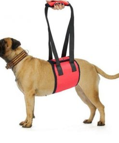 Adjustable Dog Lift Harness   Best Product for Mobility and Recovery Dog Lovers ROI test GlamorousDogs