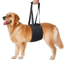 Adjustable Dog Lift Harness | Best Product for Mobility and Recovery Dog Lovers ROI test GlamorousDogs