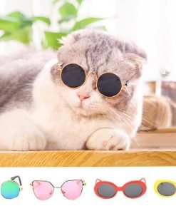 Cool Cat Sunglasses Stunning Pets