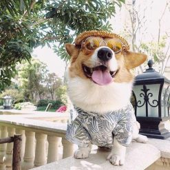 COOL™: Cool Sunglasses for Pets Sunglasses For Pets GlamorousDogs