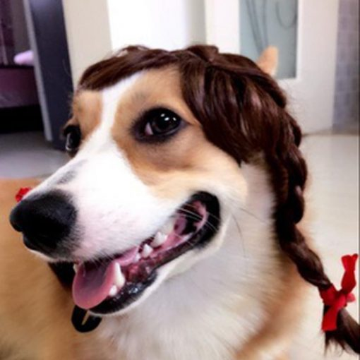Cool Pet Wig With Chin Strap Stunning Pets 2