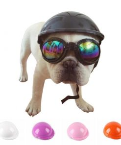 DOG BIKE HELMET Stunning Pets