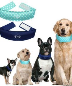 Dog Cooling Collar Reduces Heat-Stress, Fights Fatigue July Test ATC GlamorousDogs
