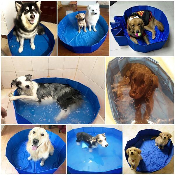 Foldable Swimming Pool for Dogs | Beat the Summer Heat August Test GlamorousDogs