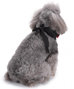 Formal Dog Tuxedo | Your Dog Will Look Dashing in This! Stunning Pets