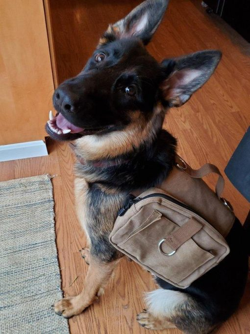German Hiking Backpack& Dog Harness For Outdoor Camping GlamorousDogs