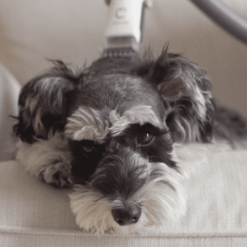 GroomPal, the world's first pet care tool! Stunning Pets