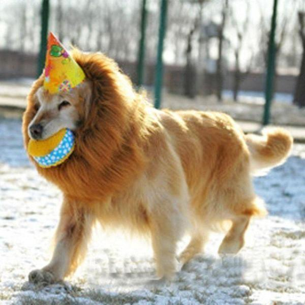 Lion Mane For Dogs, Turn Your Dog Into A Strong Lion Dog Wig GlamorousDogs