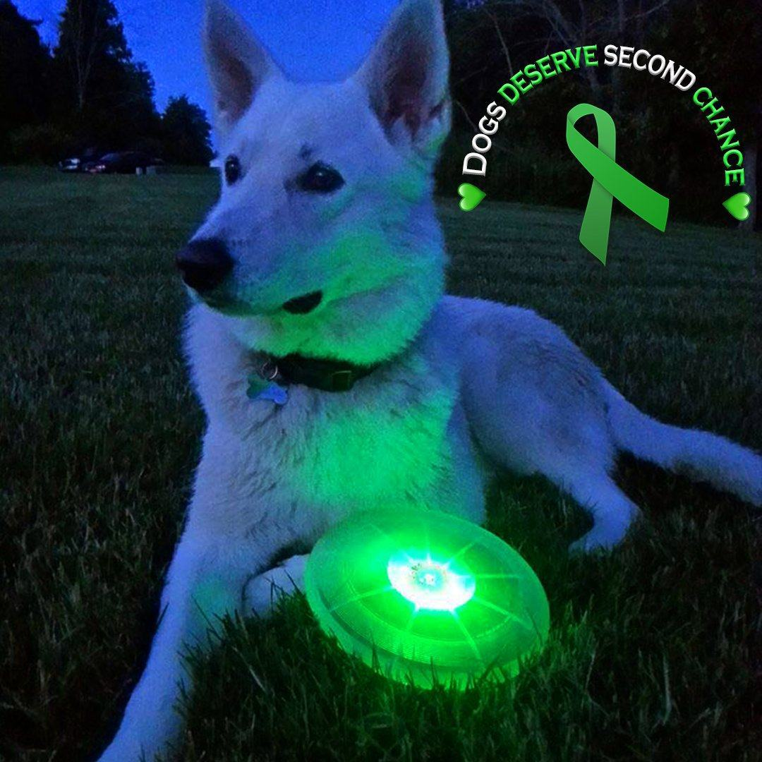 Liver Cancer Support Frisbee For FREE   Just Cover Shipping! Dog Toys GlamorousDogs