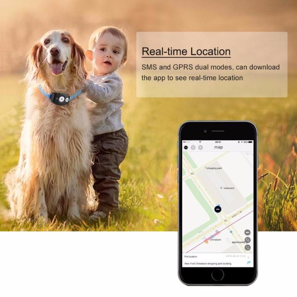 Never Lose Sight of Your Pet with GPS Tracker Stunning Pets