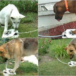 Outdoor Drinking Water Fountain for Dogs For Dogs ROI TEST Stunning Pets