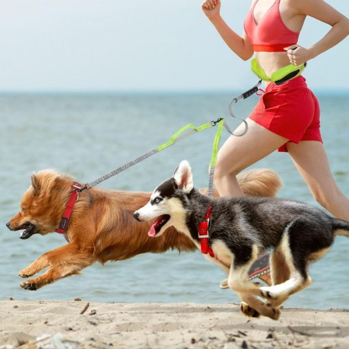 Best Elastic Double Leash For Dogs - Super Useful For Running 8