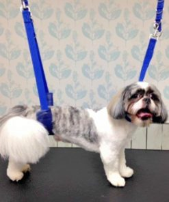 Dog Grooming Leash