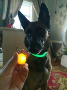 Bright Dog / Cat LED Night Safety Flash Light for Collars - (Free Shipping Now)