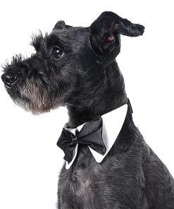 Bow Tie For Pets