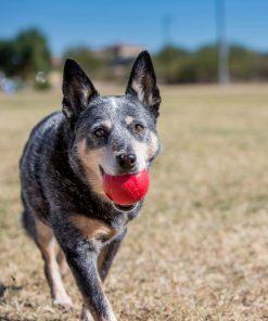 play Fetch Dog ball