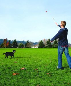 Tennis ball Launcher Stunning Pets