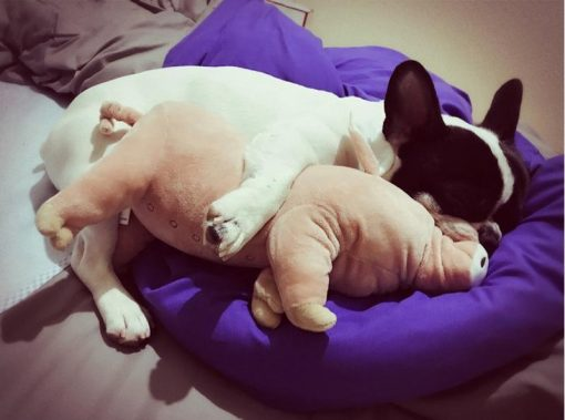 The Cute Pig Dog Pillow Stunning Pets