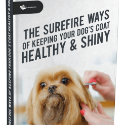 The Surefire Ways of Keeping Your Dog's Coat Healthy & Shiny Glamorous Dogs Shop - Glamorous Accessories for Your Dog + FREE SHIPPING