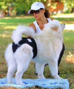 Washable Reusable Dog Diapers for Female Dogs & New-born Puppies August Test GlamorousDogs