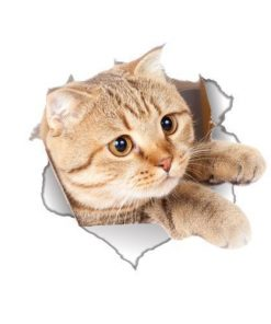 Waterproof Cat/Dog 3D Wall Sticker Stunning Pets cat2